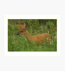 Doe Browsing Art Print