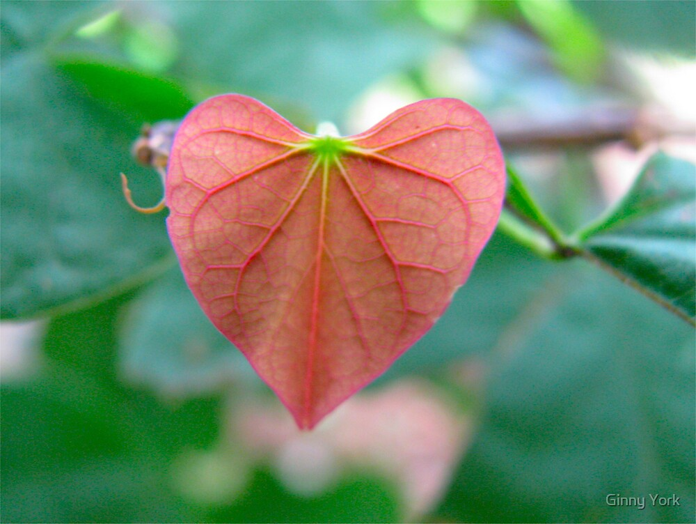 The Heart Of A Tree by Ginny York
