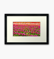 For The Love Of Tulips Framed Print