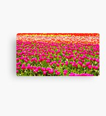 For The Love Of Tulips Canvas Print