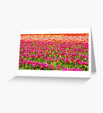For The Love Of Tulips Greeting Card