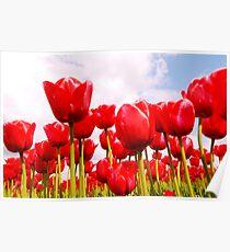 Tulip Fantasy Poster