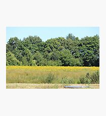 Rural Woodland Landscape Photographic Print