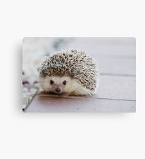 a precious lil hedgehog  Canvas Print