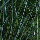 Grassy abstract by medley