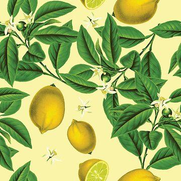 Lemons - botanical illustration pattern by gifrancis