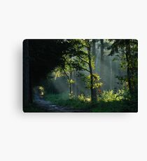 Searching for the sunny spots  Canvas Print