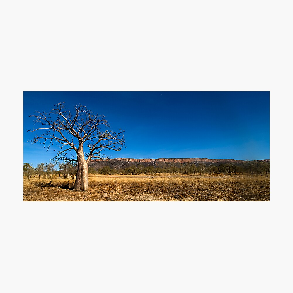 The Baobab Photographic Print