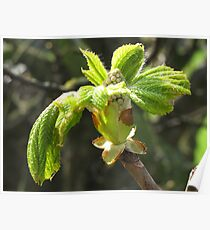 Russet Leaves Poster