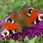 Butterfly Colors by ienemien