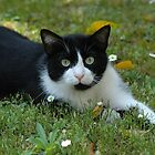 Among the Daisies by Nerone