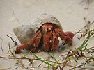 Little Crab by yolanda
