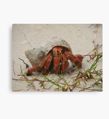 Little Crab Canvas Print