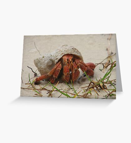 Little Crab Greeting Card