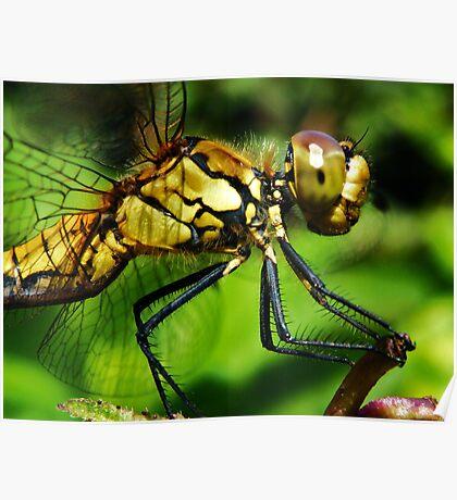 I am so pretty o so pretty....... Poster