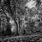 Monochrome Trees by Paul Bird