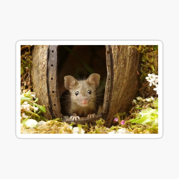 George the mouse in a log pile house Sticker