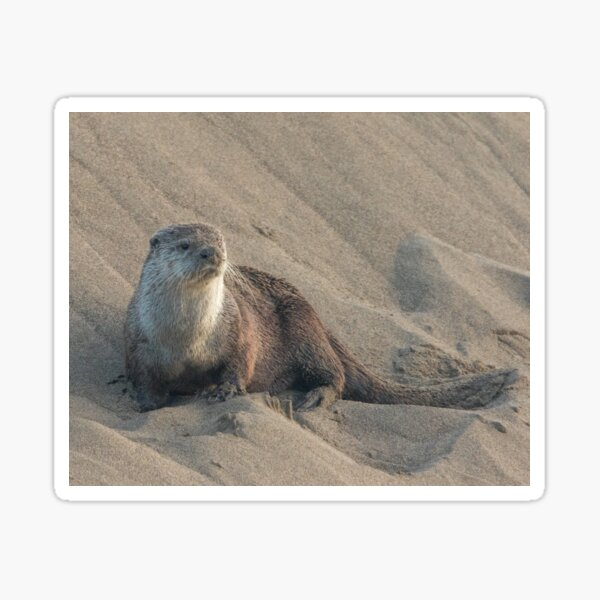 Sandbank with otter Sticker