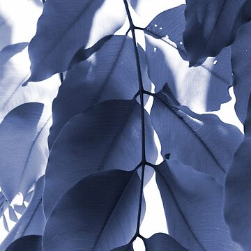 Leaves V by The-Blanc-Sheep
