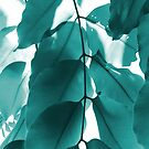 Leaves VI by Lilac Laron