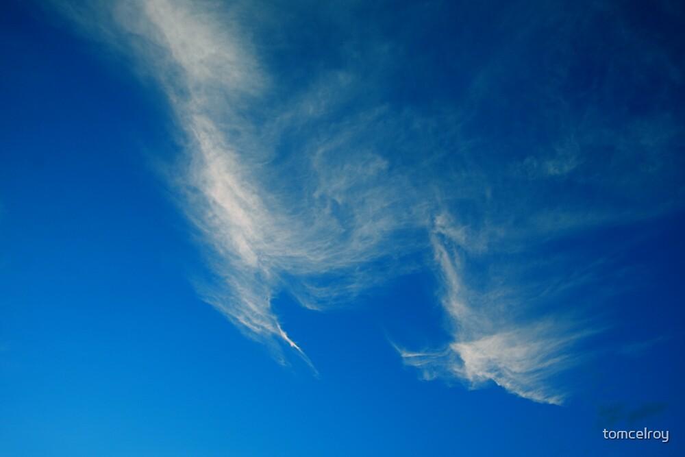 Amazon Sky by tomcelroy