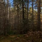 autumn, faskally woods by codaimages