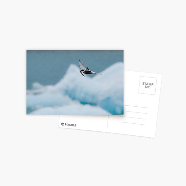 Arctic Tern, Jökulsárlón Postcard
