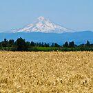 volcanic harvest by Bruce  Dickson