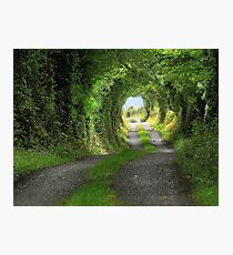 Green Tunnel Photographic Print