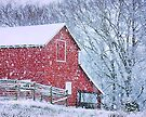 BARN BLUSTER, Photo, for prints and products by Bob Hall©
