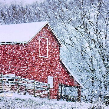BARN BLUSTER, Photo, for prints and products by ArtbyBob