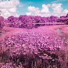 Pink lily pads by Adam Nixon