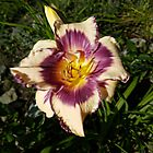 Canadian Border Patrol Lily by Vickie Emms