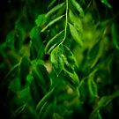 Rain in green by laurentlesax