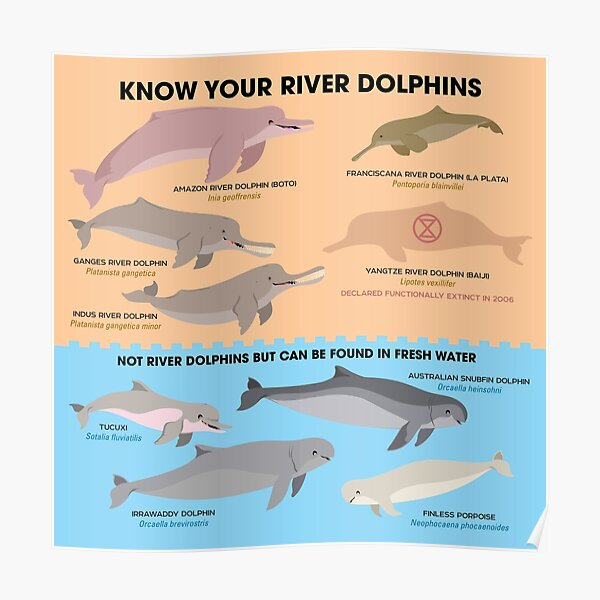 Know Your River Dolphins Poster