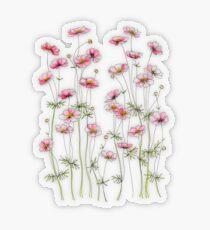 Pegatina transparente Cosmos rosa flores