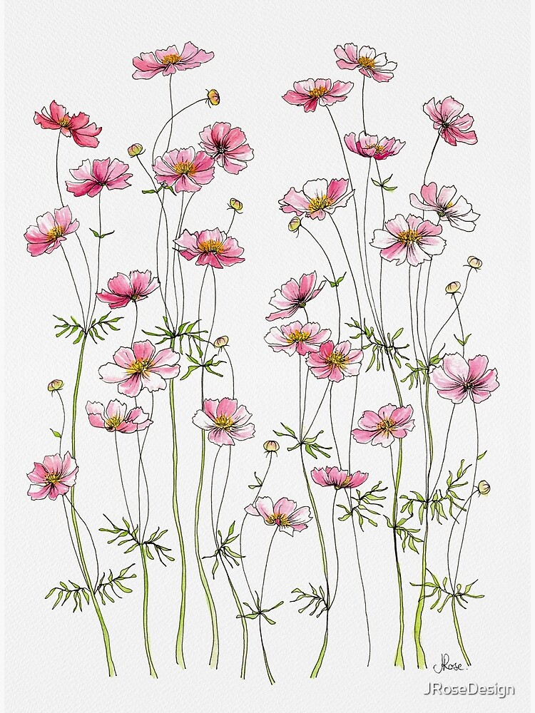 Pink Cosmos Flowers by JRoseDesign