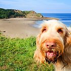 """""""Let's Go To The Beach"""" - Orange And White Italian Spinone Headshot by heidiannemorris"""