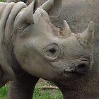 Baby Rhinoceros by wiggyofipswich