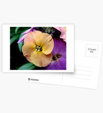 Yellow Wallflower Postcards