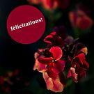 « Félicitations Merisi » par Delphine Comte