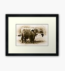 Highland Coo Framed Print