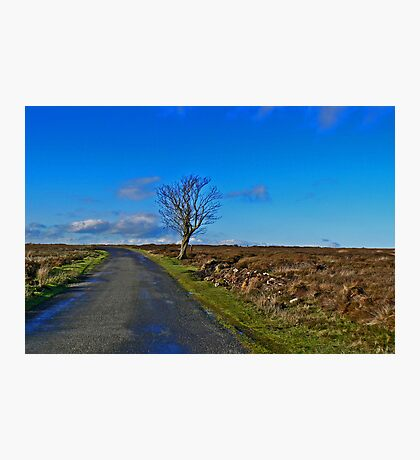 The Lonely Tree Photographic Print