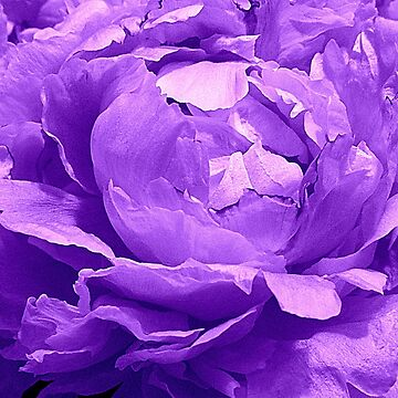 Lavender Love  ^ by ctheworld