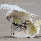 Correllas at the beach by vincedoranart