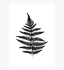 Black fern Photographic Print