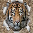 Bengal Tiger in Action by NadineMay