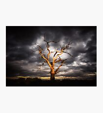 Dead Tree Against A Living sky Photographic Print