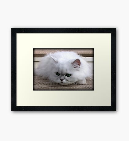 About to Pounce.... Framed Print