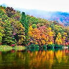 Misty Fall in West Virginia by Viv Thompson